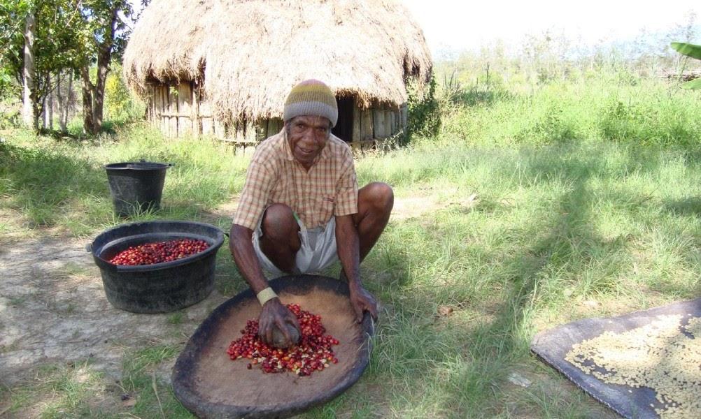 coffee farm in indonesia