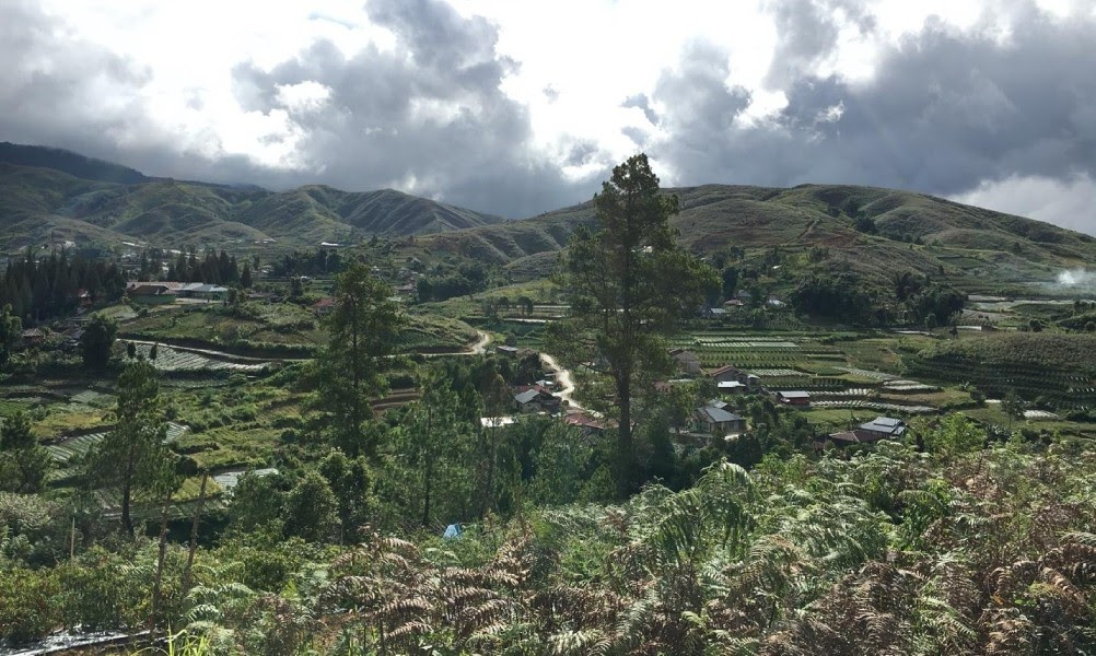 indonesian coffee farms